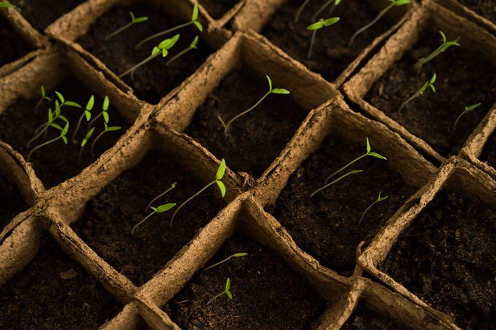 Tropisme En Chantier €� Agriculture Urbaine Et Repas Partagé
